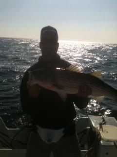bass1 resized 600
